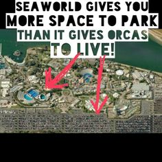 Seaworld . Empty The Tanks . Freedom . Anti Captivity . Dolphins . Don't buy a ticket .