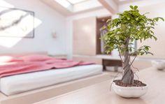 Cómo alambrar un bonsái paso a paso