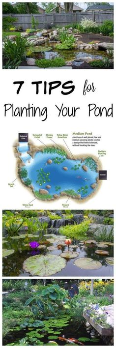 Tips for Planting Your Backyard Pond #gardeningorganic