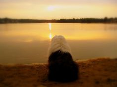 enjoying the sunset by dewollewei, via Flickr