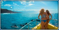 Pacific Whale Foundation - Best Environmental Adventure Maui http://www.mauitropicalvacations.com