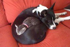 20 süße Katzen, die einen Hund als Kopfkissen lieben. Nr. 20 sieht aus, wie ein Hund mit Katzenhut.