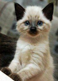 #cat #kitten #gato #little