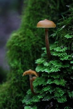 ‍♀️‍♀️Fungi ‍♀️Mushrooms ‍♀️‍♀️More Pins Like This At FOSTERGINGER @ Pinterest ‍♂️