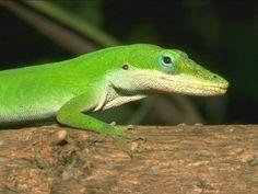 animals reptiles #animals #reptiles #lizard