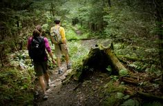 There are many hiking trails in the National Park from the beginner to the very experienced. Blue Ridge Parkway, Beautiful Waterfalls, Great Smoky Mountains, Hiking Trails, Outdoor Activities, Tennessee, Vacations, Places To Go, Colorado