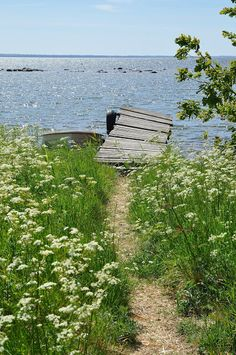 Summertime, living is easy. At least by the sea. Nature Aesthetic, Summer Aesthetic, Beautiful World, Beautiful Places, Pathways, Country Life, Summertime, Photos, Pictures