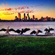 Catching the last sun rays of the day ☀️ #cityofperth #cityskyline 📸 @kimmerrin