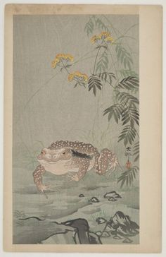 'Toad next to a flowering plant' ( Meiji era, circa 1910 ).  Woodblock print by Ohara Koson 小原古邨 (1877 - 1945).  Published by Daikokuya.  Image and text courtesy Freer Sackler. Japanese Art  Copyright with museum.