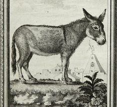 1781 Antique Buffon copper engraving of an ASS. Donkey. 231 years old rare print.. $24.00, via Etsy.