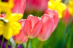 Can't get enough by kennymatic, via Flickr