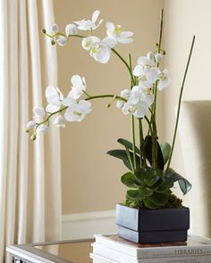 White Orchid in Black Planter Faux-Floral Arrangement by John-Richard Collection - Handcrafted arrangement of natural allium grass infuses a room with organic appeal