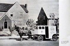 Netherland Milk Delivery