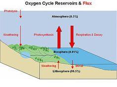 Ciclo do oxigênio – Wikipédia, a enciclopédia livre