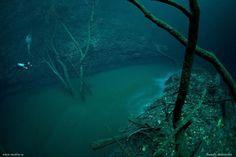 Scuba Diving in an Underwater River - Cenote Angelita, Mexico