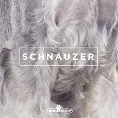 #Dog-Inspired #Design: We think the best, most #beautiful #coats belong to our four-legged family members. #Schnauzer