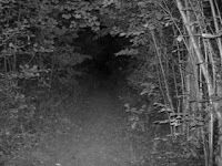 Clapham Wood Mystery is represented by a large collection of strange occurrences which take place in the Clapham Wood, West Sussex, England. It is said that people have encountered numerous strange apparitions in the woods; that they disappeared in there; that many of their pets went missing there, and so on.