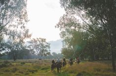As part of the High Country Harvest, The Forge Family are offering an authentic farm gate experience with a twist. Learn the lost art of packing a horse, whilst sampling Dal Zotto Prosecco. Farm Gate, When I Grow Up, Photo Journal, Lost Art, Prosecco, Packing, Country Roads, Bag Packaging
