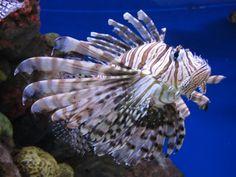 aquarium in Boston