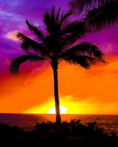 THE COLORS OF A TROPICAL SUNSET