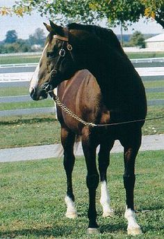 Northern Dancer, the most successful sire of the 20th century. One of the greatest sires in Thoroughbred history.