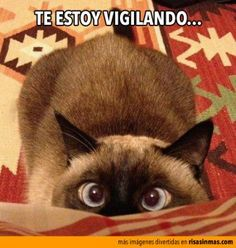 Te estoy vigilando