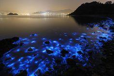 http://www.theatlantic.com/photo/2015/01/a-bioluminescent-bloom-in-hong-kong/384759/