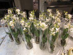 Puttet små orkideer i 25 vaser.