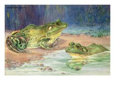 Two southern bullfrogs sit in water. What are they thinking about? This image would make a great story starter.
