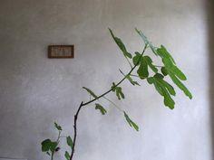 The Plant Portraits of Mieke Verbjilen