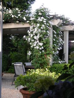 Klematis 'Huldine' | Zon 1-4. Blommar augusti-oktober. Färdig höjd 4-5 m. Trivs i sol till lätt skugga i djup, väldränerad och humusrik jord. Klättrar på spaljé, tripoder, i träd men funkar som marktäckare och planterad i stora krukor.