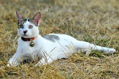 Viele Katzen sind auch Freigänger und lieben auch diese Freiheiten. Das…