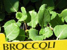 Información básica para cosechar vegetales en casa: Crea tu huerto casero