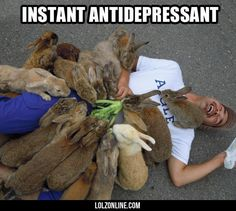 Bunnies Cure Pretty Much Everything #lol #haha #funny