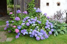 Výsledek obrázku pro venkovská zahrada