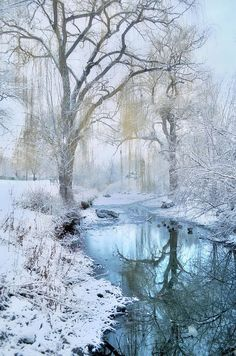 Winter Reflections in Blue Art Print