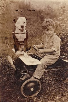 A boy, his pedal plane, and his pit bull dog.
