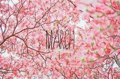 A fun image sharing community. Explore amazing art and photography and share your own visual inspiration! Hello March Images, Hello March Quotes, March Pisces, Pink Flowering Trees, Happy March, March 7, Spring Has Sprung, Months In A Year, Four Seasons