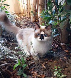 awwww-cute:   Albert, king of the jungle