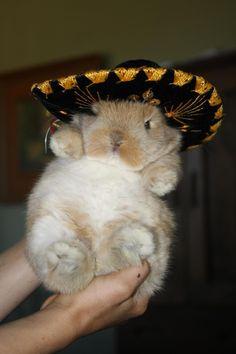 bunny in a sombrero!!!