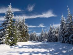 An idyllic winter scene in the Thuringian Forest, Germany (admittedly out of season right now in the northern hemisphere).