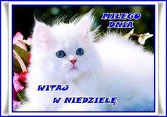 BLOG OBRAZKI: MIŁEJ NIEDZIELI Dna, Cats, Animals, Blog, Gatos, Animais, Animales, Animaux, Animal