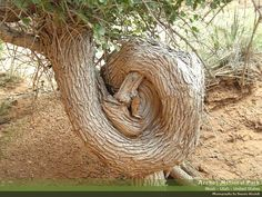 Curly tree at Arches National Park in Utah