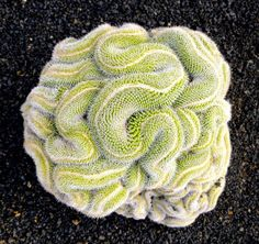 Stunning Photos Of Geometrical Plants For Symmetry Lovers----Thinking Cactus. This cactus looks like a brain, or a web of snakes, either way it's oddly perfect. Types Of Cactus Plants, Unusual Plants, Cool Plants, Growing Plants, Cacti And Succulents, Planting Succulents, Garden Plants, House Plants, Geometric Patterns