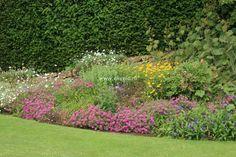 Phuopsis stylosa, licht woekerend, laat bloeiend, wintergroen, bodembedekker