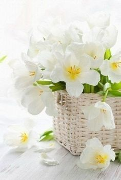 """Magnificent white tulips in high-quality photos is very beautiful, in a big post titled """"HD Lily Flowers Pictures - White Tulips"""". White Tulips, White Flowers, Spring Flowers, Simple Flowers, My Flower, Beautiful Flowers, Deco Floral, Foto Art, Flower Basket"""
