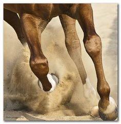 Arabian horse by ~salhulou on deviantART