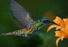 colibri en el jardin - Buscar con Google