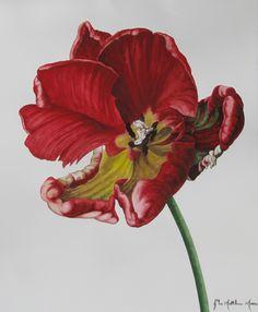 Rococco by John Matthew Moore Botanical Illustration, Botanical Prints, Illustration Art, Nature Illustrations, Macro Flower, Art Flowers, Art Styles, Love Art, Tulips