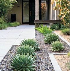 Texas Landscaping, Small Front Yard Landscaping, Succulent Landscaping, Tropical Landscaping, Landscaping With Rocks, Backyard Landscaping, Landscaping Ideas, Modern Landscaping, High Desert Landscaping